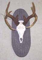 European mount on bark display panel