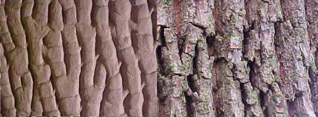 taxidermy habitat bark and real bark